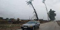 Аллея Раппопорта после вырубки в городе Чолпон-Ата. Архивное фото