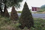 Ата-Бейит мемориалдык комплексине бараткан жолдун боюндагы арчалар. Архив