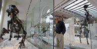 Скелет гигантской саблезубой кошки на выставке в музее Лос-Анджелеса, США. Архивное фото