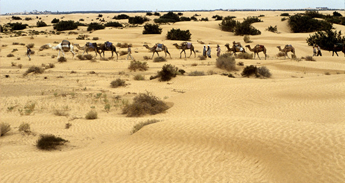 Караван верблюдов с участниками экспедиции в пустыню Сахара. Архивное фото