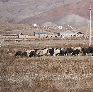 Вид на село в Нарынской области. Архивное фото