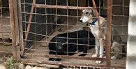 Собаки из приюта в Бишкеке. Архивное фото