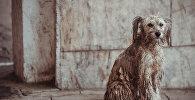 Бездомная собака в Бишкеке. Архивное фото