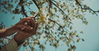 Прогулка по яблоневой роще