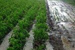 Последствия града в Ак-Суйском районе села Боз-Учук, Ак-Чий.