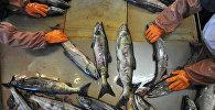 Разделка рыбы. Архивное фото