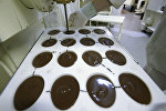 Фабрика по производству шоколада. Архивное фото
