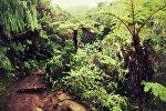 Деревья в джунглях. Архивное фото