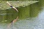 Купание в озере. Архивное фото