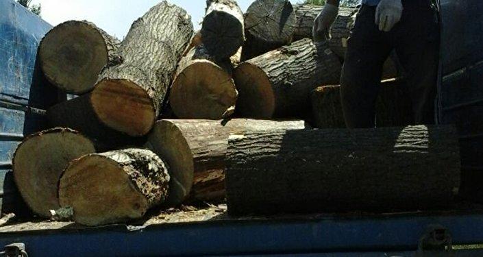 Как отмечает мэрия, в социальных сетях появились жалобы жителей столицы на то, что агрономы Зеленстроя вырубают здоровые деревья.