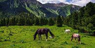 Лошади на ущелье Джеты-Огуз.  Архивное фото