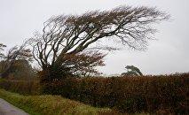 Накренившиеся деревья от сильного ветра