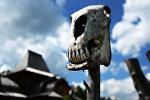 Коровий череп. Архивное фото
