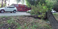 Упавшее дерево на пересечении улиц Панфилова и Льва Толстого