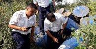 Сотрудники Госэкотехинспекции осматривают ядовитые бочки найденные вблизи Бишкека