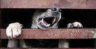 Дарыгерлер: дүйнөдө күн сайын кутурма оорусунан 160 адам өлөт