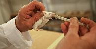 Испытания на мышах. Архивное фото