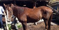 Фотография похищенной лошади сделаны в Казахстане