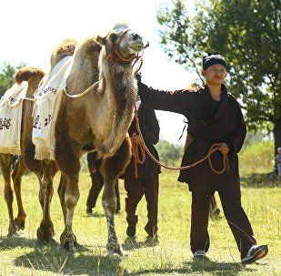 Караван с верблюдами и лошадьми, вышедший из Пекина в Бишкеке