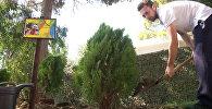 Российские олимпийцы посадили деревья на авиабазе Хмеймим в Сирии