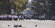 Бишкек шаарында борборунда учуп жүргөн көгүчкөндөр