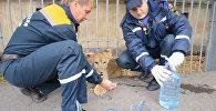 Хищник в центре Уфы: спасатели забрали найденного прохожим львенка