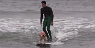 Первые в мире соревнования по серфингу среди собак
