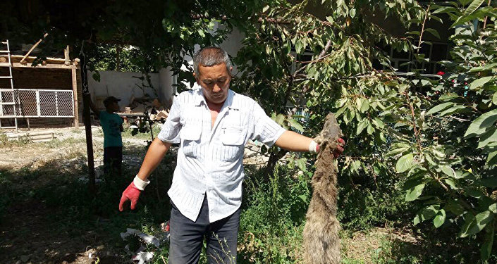 Местный житель села Мамажан Кара-Суйского района Ошской области Кенже Досбаев.