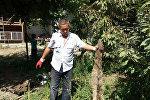 Нападение шакалов в селе Мамажан Кара-Суйского район