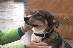 Умный ошейник: российский фитнес-трекер для собак поступил в продажу