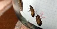 Как вывести двойку из дневника с помощью тараканов