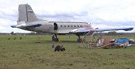 Медвежонок Мансур поселился на аэродроме под Тверью и подружился с лайкой