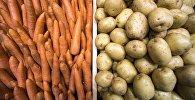 Морковь и картофель на полке. Архивное фото