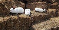 Архивное фото кроликов в крестьянском фермерском хозяйстве