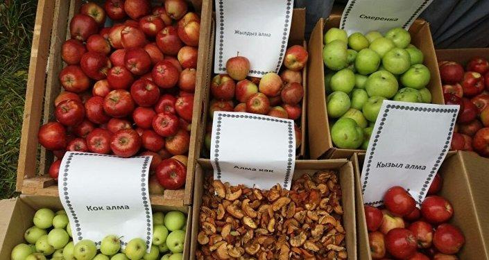 Яблоки Нооката — под таким брендом фермеры Ноокатского района Ошской области намереваются экспортировать этот вид фруктов в Китай и Турцию