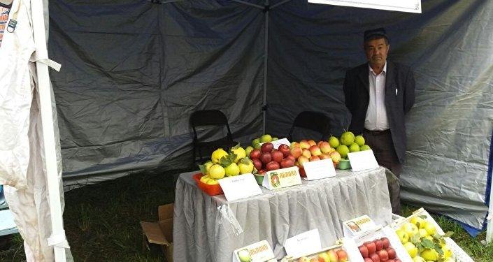 В Ноокатском районе второй раз прошел республиканский фестиваль яблок. В нем приняли участие представители Казахстана и Турции
