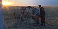 Путин покормил лошадей Пржевальского в заповеднике под Оренбургом