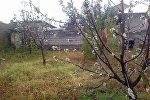 В саду у жителя новостройки Кара-Жыгач Адиля Супатаева в Бишкеке зацвела черешня.
