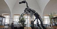 Кости динозавра в музее, архивное фото