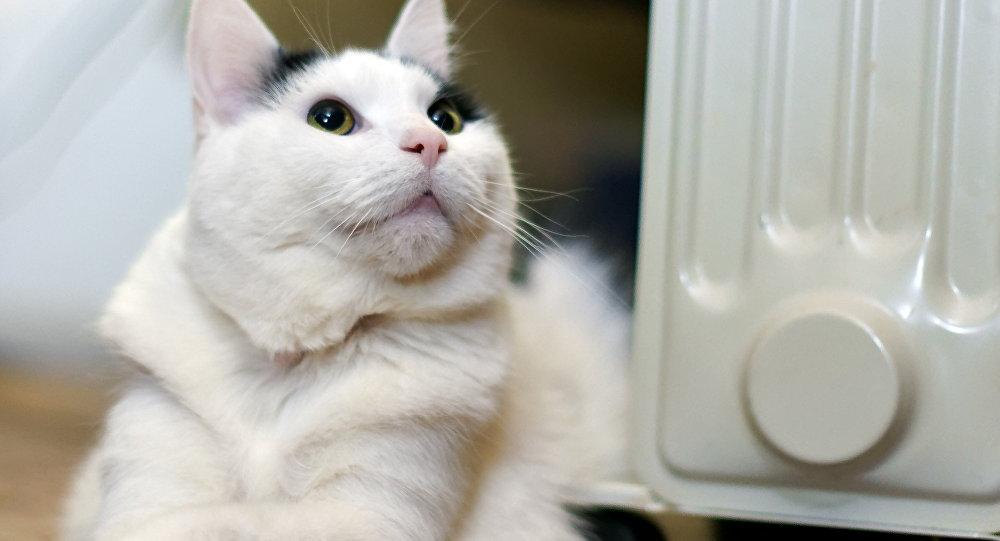 cat bladder infection remedy
