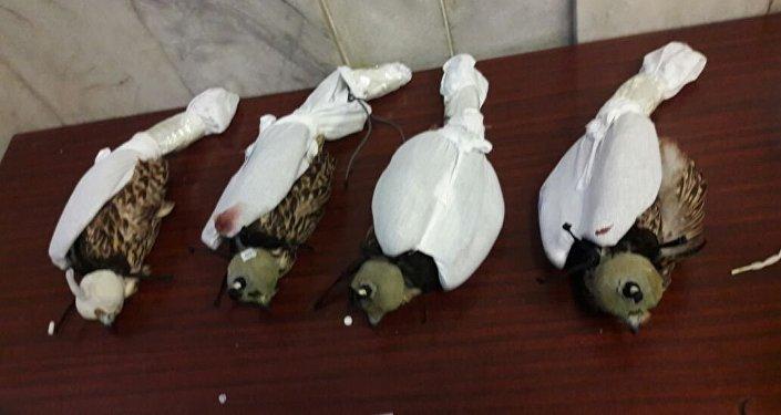 Задержаны жители, пытавшиеся вывезти вОАЭ четырех соколов-балабанов