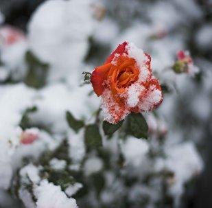 Осенний снег в Бишкеке