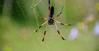Паук на паутине. Архивное фото