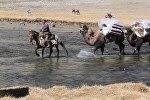 Шамал улуган тоодогу кыргыздар. Памирдеги боордоштордун жүрөк эзген жашоосу