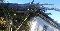 Последствия сильного ветра в селе Сары-Камыш под городом Балыкчи Иссык-Кульской области