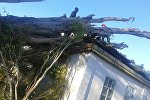 Шейшемби күнү Балыкчы шаарына жакын Сары-Камыш айылында катуу шамалдан 40тан ашык бак кулап, үйлөрдүн чатырларын жабыркатты