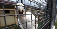 Попугай в клетке. Архивное фото
