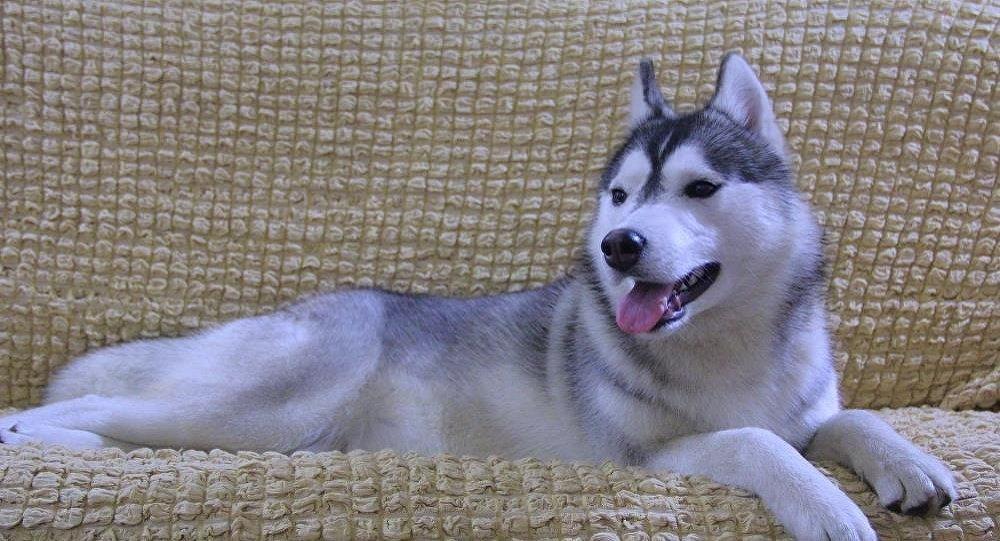 Похищение собаки из вольера в селе Военно-Антоновка