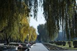 Ивы в парке у площади Борцов революции в Бишкеке. Архивное фото