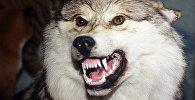 Чучело волка. Архивное фото